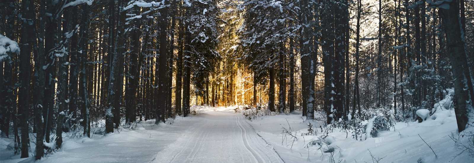 cross-country-skiing-2065439_1920